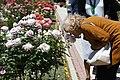 Una rosa alemana gana el concurso internacional 'Villa de Madrid' 05.jpg