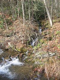 Upper Pine Bottom Run Tributary.jpg
