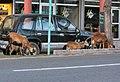 Urban Goats on Roadside (6543978451) (cropped).jpg