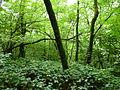 Vegetation im Steilhang des Bogenberges.JPG