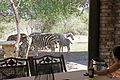 Veranda with zebra.jpg