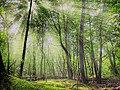 Vert d'été.jpg