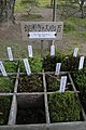 Very Important Moss (aaron.michels).jpg