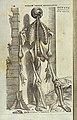 Vesalius, De humani corporis fabrica, 1543 Wellcome L0031740.jpg