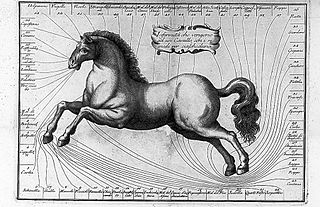 Veterinary medicine; engraving of horse, 1804 Wellcome L0012367 (cropped).jpg