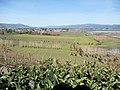 Viansa Vineyards & Winery, Sonoma Valley, California, USA (7323653058).jpg