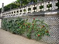 Villandry - château, jardins (08).jpg