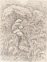 Virgin Wood - from our Bedroom Window Presidencia - Petropolis 5th Jan. 1855