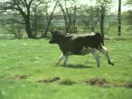Bestand:Voorjaar op de boerderij Weeknummer 72-20 - Open Beelden - 63499.ogv