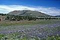WILDFLOWER FIELD BY HAYSTACK BUTTE-CROOKED RIVER NATIONAL GRASSLAND (23565690129).jpg