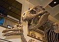 WLA hmns Tyrannosaurus rex 3.jpg