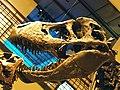 WLA hmns Tyrannosaurus rex Montana.jpg