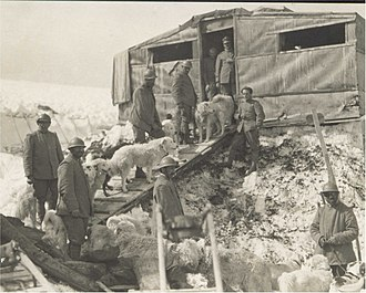 Alpini and Mountain Artillery formations in World War I - Ski troops with their sled dogs on Adamello glacier.