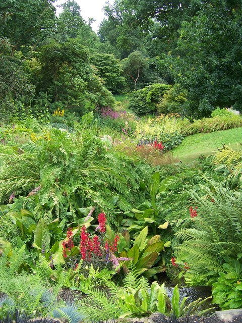 Wakehurst Place Bog garden - geograph.org.uk - 955414
