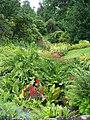 Wakehurst Place Bog garden - geograph.org.uk - 955414.jpg