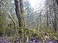 Wald in der Nähe von Weil der Stadt - panoramio.jpg
