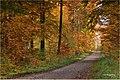 Waldweg Im Herbst 1 4 (128870711).jpeg