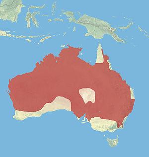Common wallaroo - Image: Wallaroo Range
