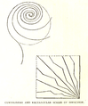 WalterCrane, Line and Form 26.png