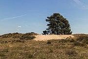 Wandeling over het Hulshorsterzand-Hulshorsterheide 05.jpg