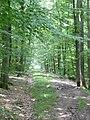 Wanderweg zwischen dem Naturfreundehaus Herrenberg und Rohrau - panoramio.jpg