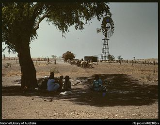 Cattle station - Donkey team at Wave Hill station, Northern Territory, ca. 1946