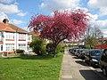 West Harrow, Wilson Gardens - geograph.org.uk - 760149.jpg