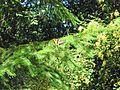 Western Tiger Swallowtail, Papilio rutulus - Flickr - GregTheBusker.jpg