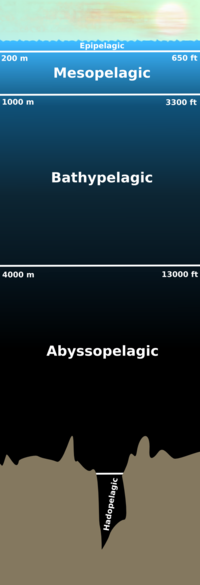 Scale diagram of the layers of the pelagic zone.