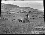 Wheat Farming (4903867970).jpg