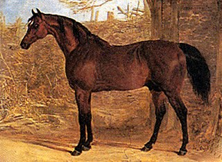 Whisker (horse) horse