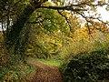 Whitehill Lane - geograph.org.uk - 1049270.jpg