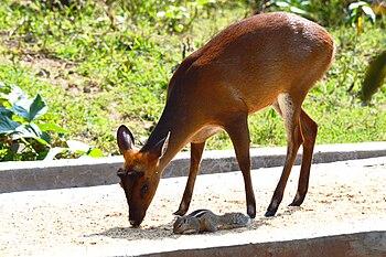Wild life tushar capture.jpg