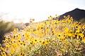 Wildflowers at Lost Dog Wash (Unsplash).jpg