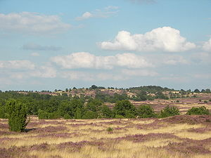 Lüneburg Heath near Mount Wilsede, Lower Saxony, Germany