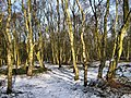 Winter sun through the wood - geograph.org.uk - 1630619.jpg