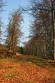Wood of Sourden - geograph.org.uk - 379033.jpg