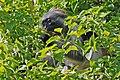 Zanzibar 2012 06 05 4254 (7592168586) (2).jpg