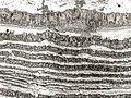 Zebrakalk Folienabzug.jpg