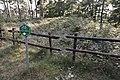 Zicht op grafheuvel, nabij de Bosstraat bij de Duitse grens - Swalmen - 20427848 - RCE.jpg