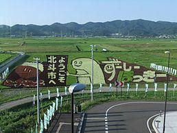 新函館北斗駅北口方面より眺めた、ふっくりんことずーしーほっきーをモチーフにした田んぼアート(2016年8月)