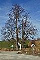 Zwei Linden an der L8280 Altweitra 2014-02 01 NÖ-Naturdenkmal GD-078.jpg