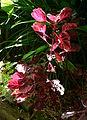 (1)Wendy Whiteleys Garden 013.jpg