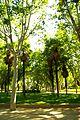 ® M.D. MADRID TEMPLO y PARQUE de DEBOD┼ - panoramio (17).jpg