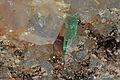 Émeraude, dolomite, pyrite, chalcopyrite 1100.FS2015.jpg