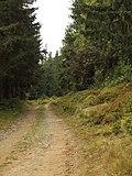 Čučoriedkova cesta - panoramio.jpg