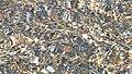 Σχινιάς Αττικής 10.jpg