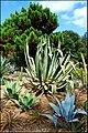 Ботанический сад Пинья де роса - panoramio (3).jpg