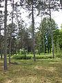 Ботанічний сад ДНУ 57.JPG
