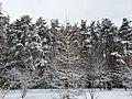 Бутовский лес в Северном Бутово-1.jpg